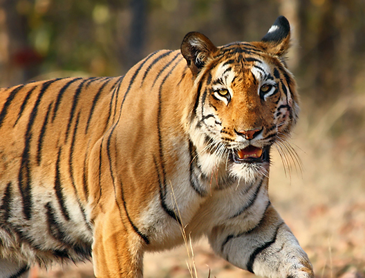 Wildlife Tour Packages From in Delhi